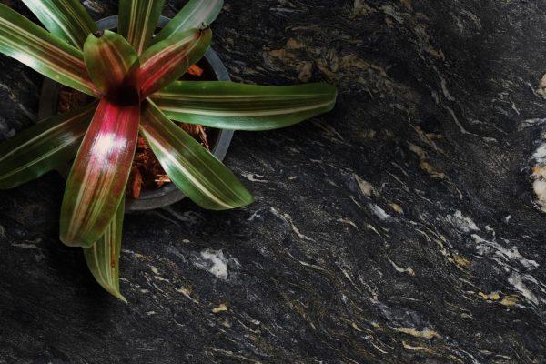 Pot Plant Cosmic Black Veined 300dpi 1